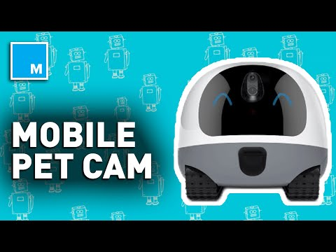 This Mobile Robot Is A BUDDY For Your Pets | Strictly Robots